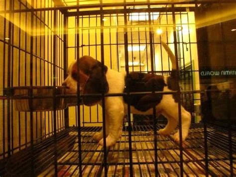 puppy station college station in the puppy station shop picture of post oak mall college station tripadvisor
