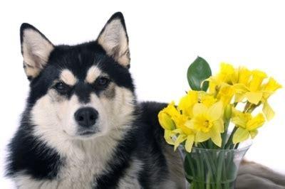 alimentazione cani anziani alimentazione malattie e cura anziano