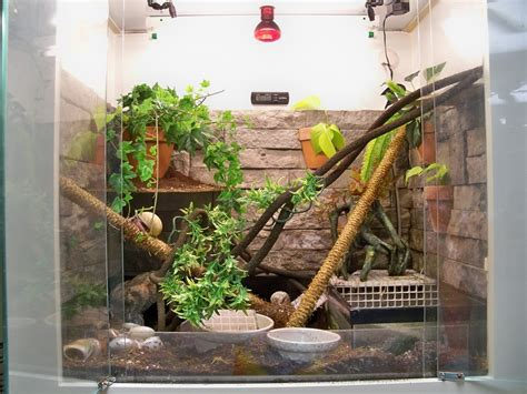 do hermit crabs need a heat l does a turtle need a heat l care sheet red ear slider