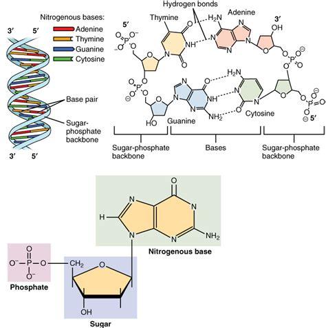 dna pattern name aufbau organisation und verschiedene arten der dna