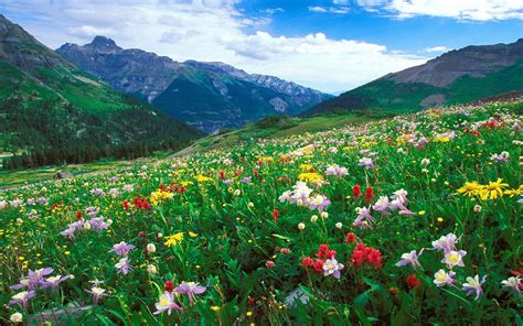 landscape meadow colorful flowers   mountains