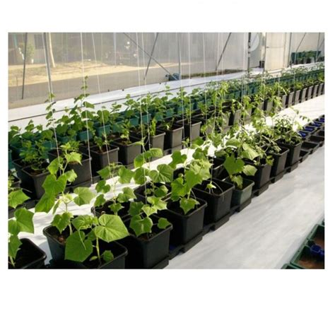 Aquaponic Starter Kit Malaysia 12 best autopot hydro images on