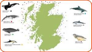 marine mammals scotland