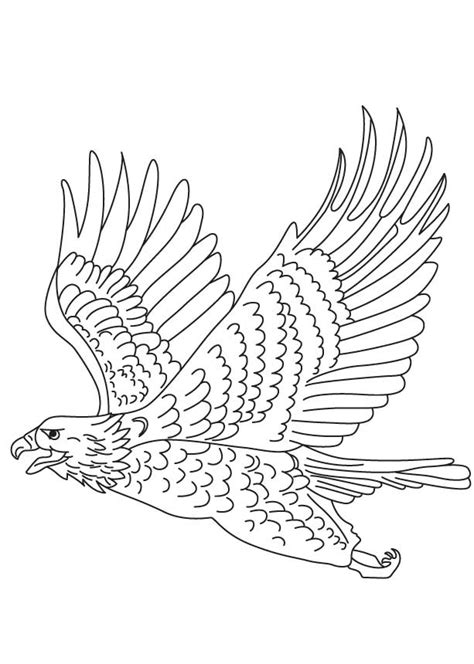 wedge tailed eagle colouring pages sea eagle coloring page short toed snake eagle coloring page download free short