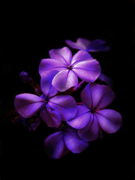 Purple Flowers Background Flowers Pinterest Purple Purple Flower Backgrounds Graphicpanic