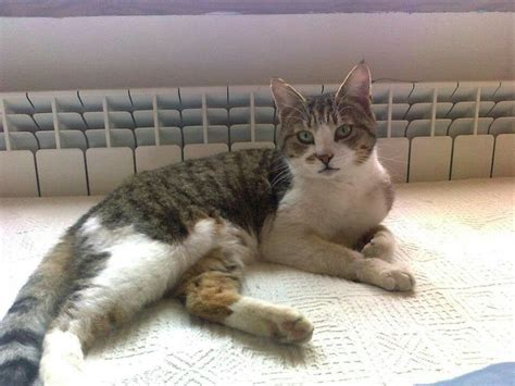 gatti divani divano gatti