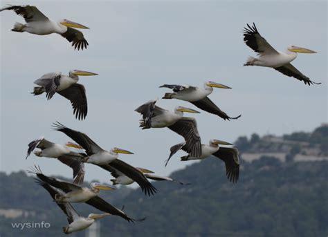 wysinfo docuweb migratory birds a web documentary
