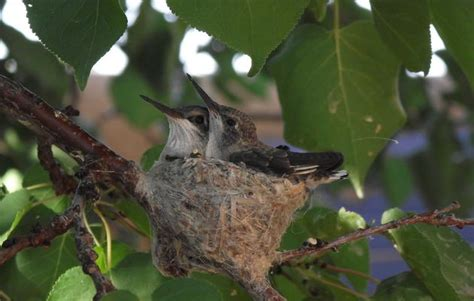 Bird Friendly Communities Audubon New Mexico