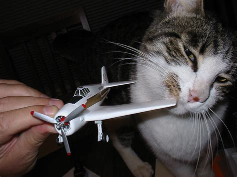 pets can now fly in delta plane cabins with cats