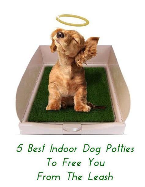 indoor dog bathroom solutions best 25 indoor dog potty ideas on pinterest apartment