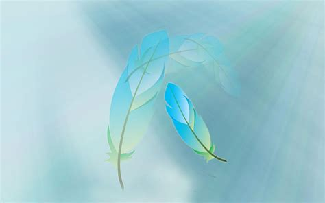 feather background beautiful feathers wallpapers and pictures one hd