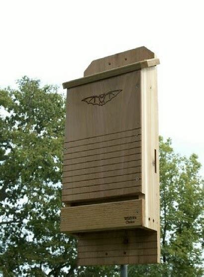 build a bat house build a bat house bat houses pinterest