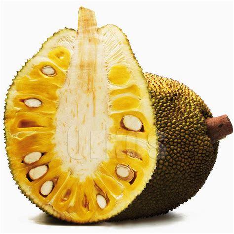 imagenes de jackfruit 8 benef 237 cios da jaca para sa 250 de
