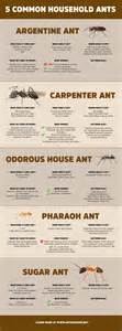 Harmful Household Products 5 common household ants ant invasion