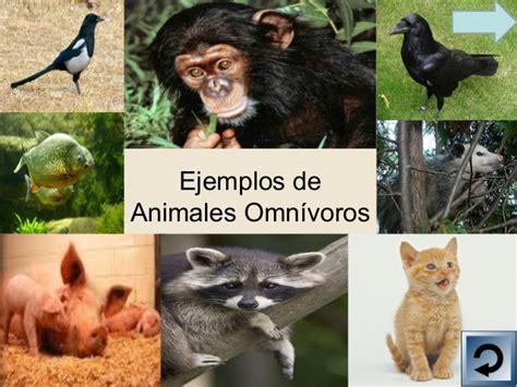 imagenes animales herbivoros carnivoros y omnivoros powerpoint animales carn 237 voros herb 237 voros y omn 237 voros