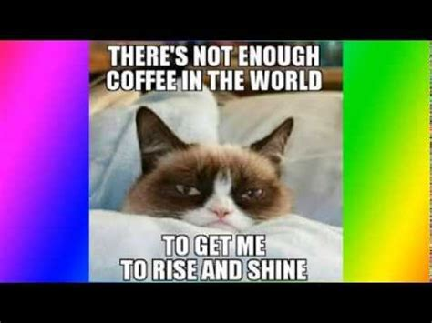 How To Make A Grumpy Cat Meme - top 50 funniest and best grumpy cat memes youtube