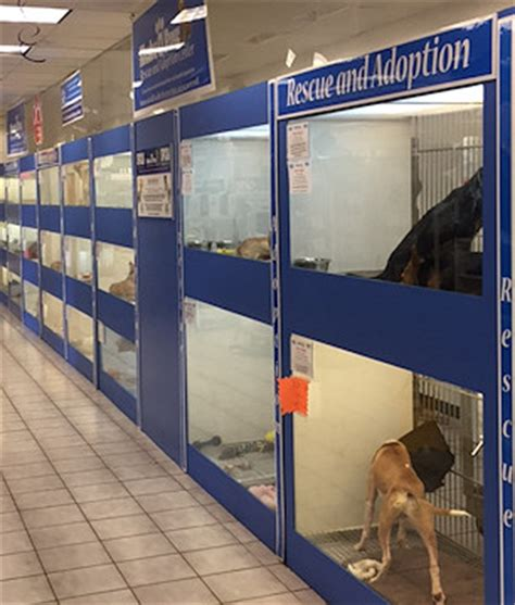 shake a paw puppies shake a paw shake a paw new jersey s puppy superstore