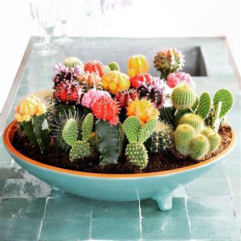 como tener un jardin en casa mini jard 237 n de cactus en una casa peque 241 a podemos tener