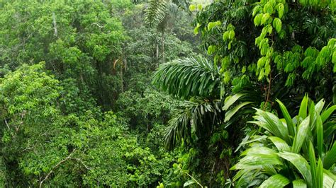 amazon rainforest ability  soak  carbon dioxide  falling science aaas