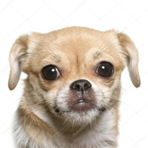 puppy faces stock photo 169 yogo 6273858