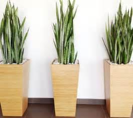 plants dress up plantscapers