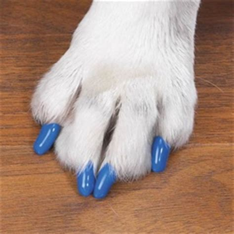 can dogs be declawed declaw nails nail ftempo