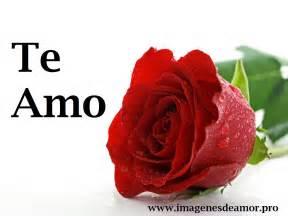 imagenes de rosas tristes con frases las mejores im 225 genes de amor y amistad 2014 con frases