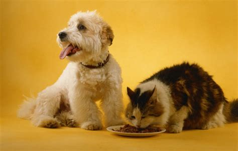 can dogs eat cat food your can dogs eat cat food health and care care and advice