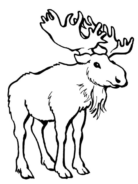 moose template 45 deer templates animal templates free premium