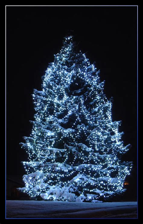 magic christmas tree pictures photos and images for