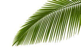 ideas  palm tree paintings  pinterest palm