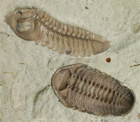 fosil definisi jenis dan proses pembentukan efbumi net