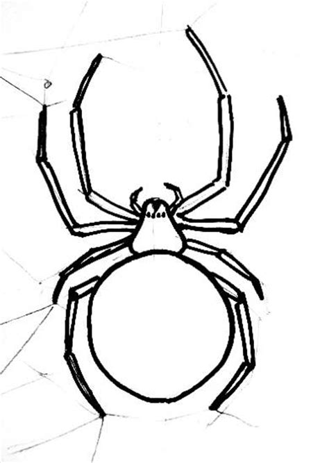 Garden Spider Coloring Page Garden Spider Drawing 28 Images Araneus Illustrations