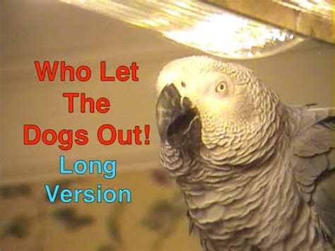 who sings who let the dogs out parrot performs his version of singin in the doovi
