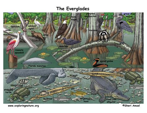 coloring page of alligator Page 2 collections