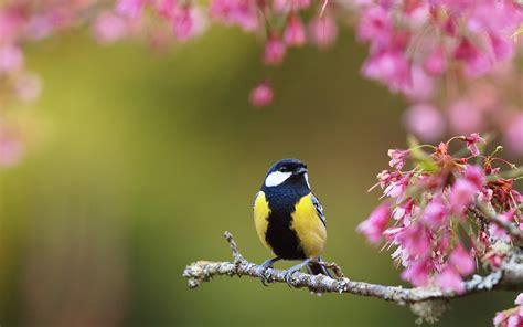 wallpaper flower bird ultra hd bird spring flowers ultra hd animals wallpapers