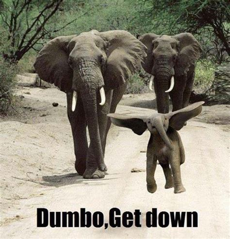 Baby Elephant Meme - elephant meme www pixshark com images galleries with a