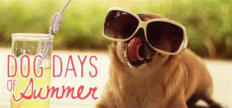 Dog Days of Summer Photo Contest   Homestead Gardens, Inc