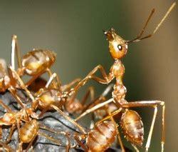 ameisen vertreiben ohne gift 3596 ameisen vertreiben ohne gift proplanta de