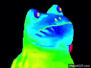 Gif Meme Maker - mlg rainbow frog on make a gif