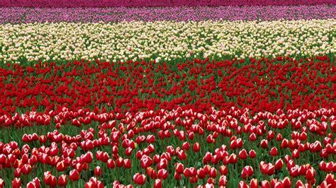 flower valley 1280 800 wallpaper flowers valley festival washington wallpaper