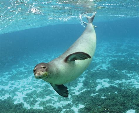 mediterranean monk seal travel guide for island crete