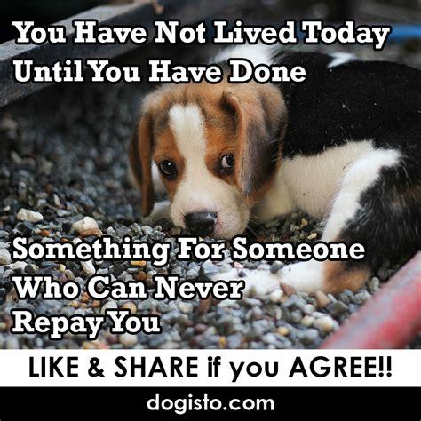 10 Dog Meme - dog meme of the day