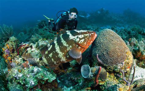 dive places bonaire marine park bonaire lesser antilles