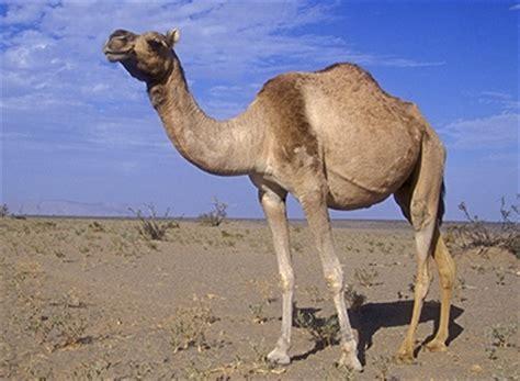 thar desert animals a complete list of desert animals that ll surely fascinate you