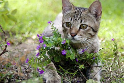 come allontanare i gatti dal giardino come allontanare i gatti randagi dal giardino