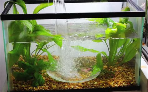 Home Decor Stores In Bismarck Nd by Easy To Grow Beginner Aquarium Beginner Tropical