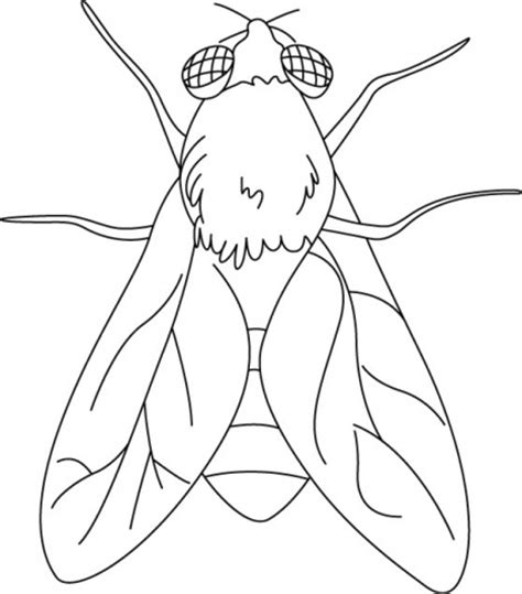 house fly coloring pages download free house fly