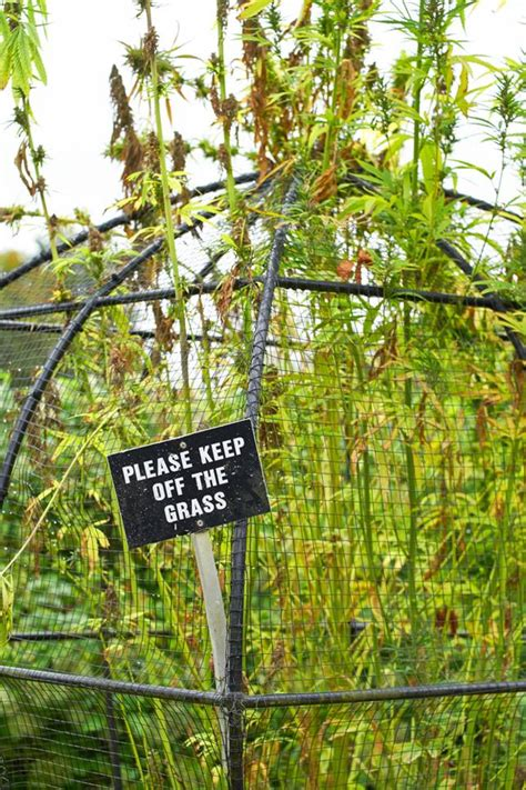 poison garden showcases the darker side of botany mnn mother nature network