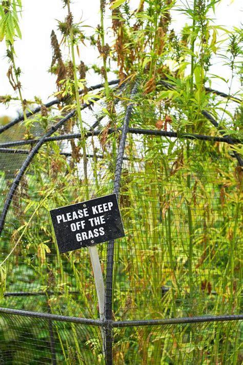 Poison Garden by Poison Garden Showcases The Darker Side Of Botany Mnn